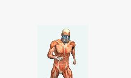 Anatomy Prezi 2