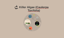 Killer Algae (Caulerpa Taxifolia)