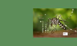 Copy of Presentacio_mosquit_tigre_municipis_pilot