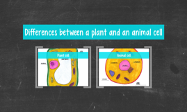 Differences between a plant and an animal cell