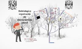 Embriología y organización del sistema nervioso central