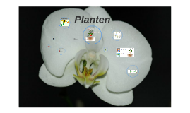 Copy of Planten