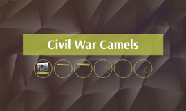 Civil War Camels