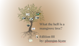 Copy of What the hell is a mangrove tree?