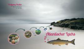 Atlantischer Lachs