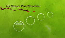 Life Science: Plant Structures