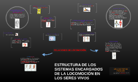 Copy of RELACIONES DE LOCOMOCIÓN
