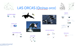 Copy of LAS ORCAS