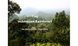 The Indonesian Rainforest