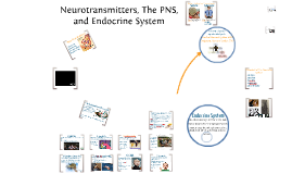 Neurotransmitters, the Peripheral Nervous System, and the Endocrine System