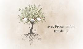 Aves Presentation (Birds!!!)