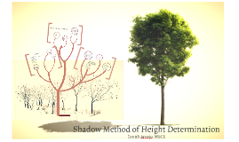 Shadow Method of Height Determination
