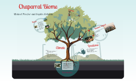 Chaparral Biome: APES