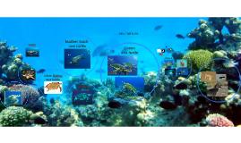 Types of Sea Turtles