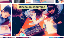 Copy of Disección cangrejos