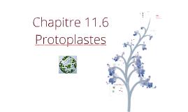 Ch 10-Culture cellulaire végétale - Cours 7
