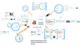 Сенсорный маркетинг: обзорная лекция