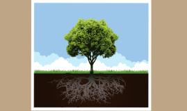 Copy of Copy of Tree