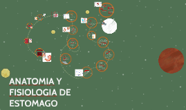ANATOMIA Y FISIOLOGIA DE ESTOMAGO