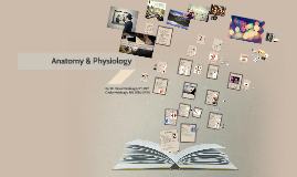 Copy of Copy of Anatomy and Physiology