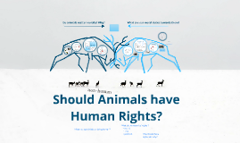 Should animals have human rights?