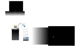 Copy of Copy of Ciclo del carbono