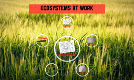 Ecosystems at work
