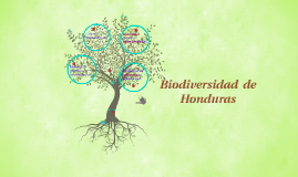 Copy of Copy of Prezi biodiversidad