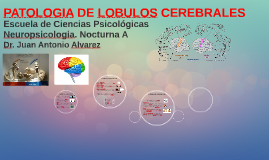 Copy of PATOLOGIA DE LOBULOS CEREBRALES