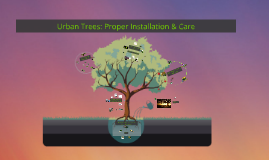 Urban Trees: Proper Installation & Care
