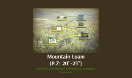 Mountain Loam