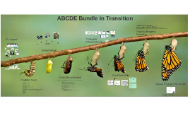 ABCDE Bundle in Transition