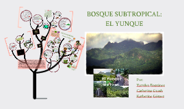 BOSQUE SUBTROPICAL: