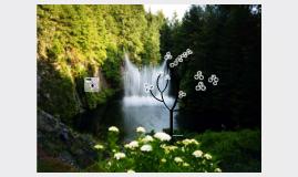 Recursos Forestales y Fondos Silvestres