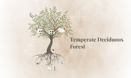 Temperate Decidious Forest