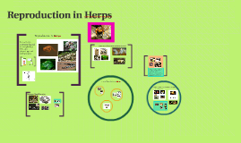 Reproduction in Herps