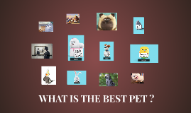 WHAT IS THE BEST PET ?