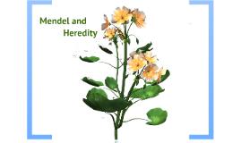 Copy of MENDEL AND GENETICS