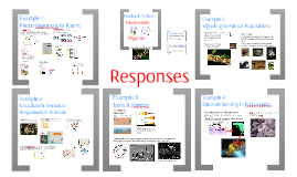 AP Bio- Responses