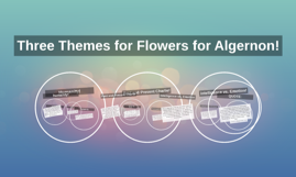 themes for flowers for algernon by julie hilvert on prezi themes ffa