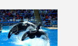 killer whales should be kept in captivity