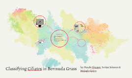 Classifying Ciliates in Bermuda grass