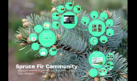 Spruce Fir Community
