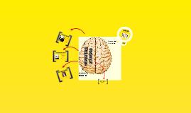 Hemisferio izquierdo