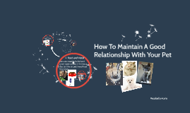 How To Maintain A Good Relationship With Your Pet