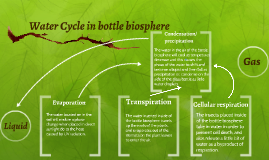 Water Cycle in bottle biosphere