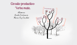 Copy of Circuito Productivo de la yerba mate