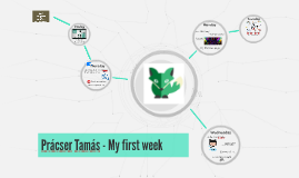 Prácser Tamás - My week