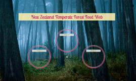 New Zealand Temperate Forest Food Web