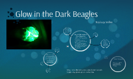 Glow in the Dark Beagles